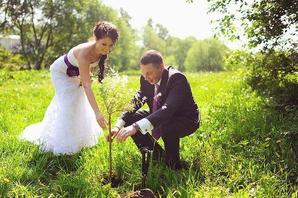"""Результат пошуку зображень за запитом """"посадити дерево"""""""